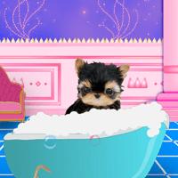 Вымойте домашнее животное
