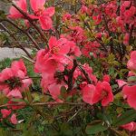 Цветы: поиск скрытых объектов